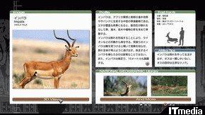 wk_080908afurika02.jpg