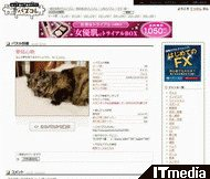 wk_081216hibikore04.jpg