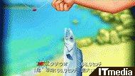 wk_090515bokunatsu14.jpg