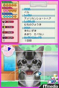 wk_100819doubutsu04.jpg