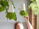 逆さ吊りで飾る植木鉢「スカイプランター」が未来的すぎる