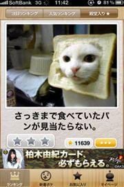 ah_boke1.jpg