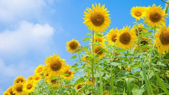 季節によって体調が変化するのは遺伝子が原因だった?