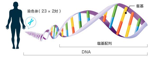 遺伝子検査は一体何を調べられる...