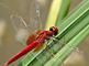 今日から始めるデジカメ撮影術:第80回 昆虫とズームの関係