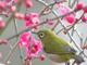 今日から始めるデジカメ撮影術:第88回 冬と野鳥の関係