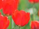 今日から始めるデジカメ撮影術:第94回 春の花と名前と季節の関係