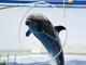今日から始めるデジカメ撮影術:第98回 水族館と水面の関係