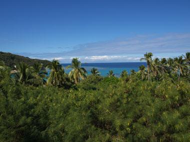 珊瑚礁 映画 青い