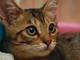 今日から始めるデジカメ撮影術:第104回 猫とブレとフラッシュの関係