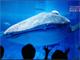 3Dハイビジョンで沖縄の「美ら海」を ソニービルで開催