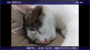 ts_provia05.jpg
