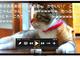 好きな動画を自由に探せます:ドワンゴ、ブラビア向けニコニコ動画視聴サービス「niconico」を提供開始——フリーワード検索に対応