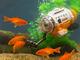 エサで誘って魚目線の水中撮影! 水槽で遊べる「サブマリナーカメラ」