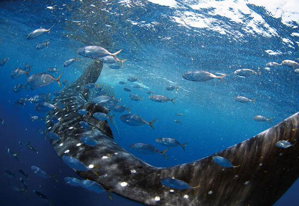 戸村 裕行 写真展「OCEAN PLANET 〜いのち煌めく海の中の時間〜」