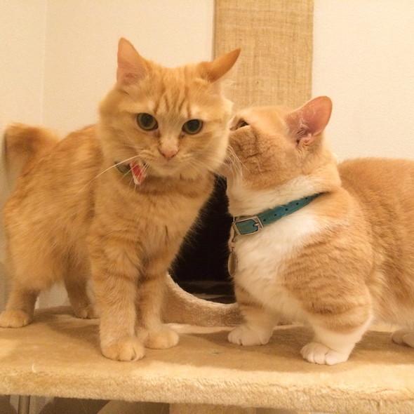 ラブラブなまいる(右)とピアス(左)
