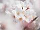 桜を楽しく撮る9つの方法