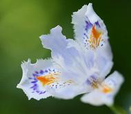 ay_flower.jpg
