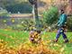 松田雅央の時事日想・特別編:紅葉の秋が来た——ドイツ人の落ち葉処理の知恵