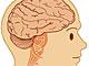 右脳と左脳……脳のタイプによって年収は違う?