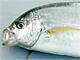 よく食べる料理と魚を食べる頻度の関係