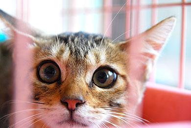 ay_cat02.jpg