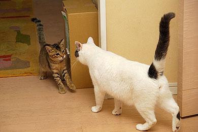 ay_cat03.jpg