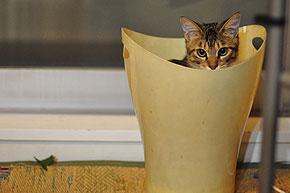 ay_cat05.jpg
