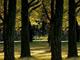 秋を愉しむ3つの提案