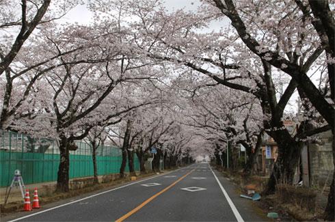 yd_shibui1.jpg