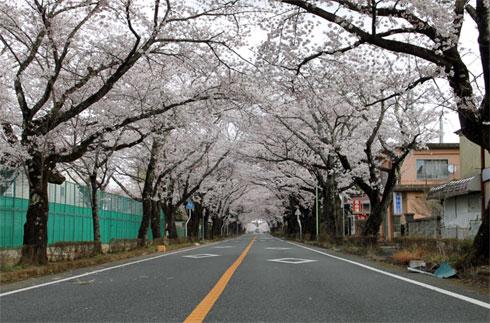 yd_shibui4.jpg