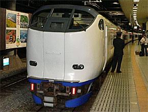 yd_sugi2.jpg