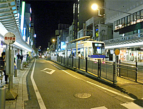yd_sugi1.jpg