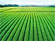 4000人のルート営業はすべて正社員 茶産業育成を支援する伊藤園