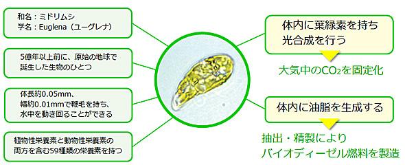 yd_midori1.jpg