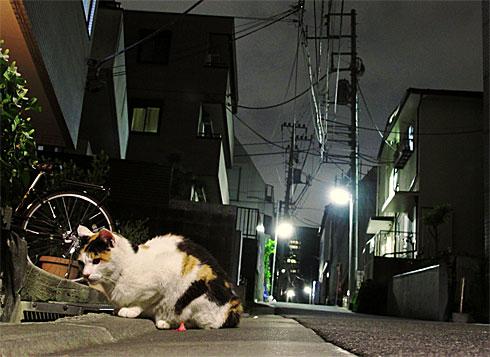 yd_cat.jpg