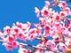 【連載】春の短期集中講座「初めてのマーケティングオートメーション」 第1回:B2Bマーケターの皆さん、お客さまへの接触機会を逃していませんか?
