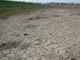 本当にITで農業を救えるのか!? コストイノベーションと地域視点で新たな営農スタイルを目指す「T-SAL」