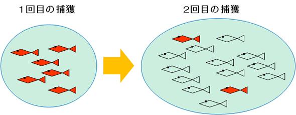 池の中の魚モデル