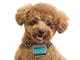 「ずっとご主人さまと一緒だワン」——富士通が愛犬の健康管理を支援する「わんダント」の提供開始