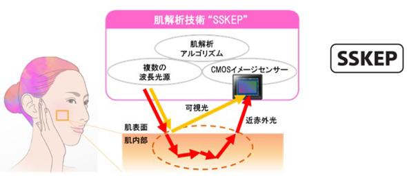 肌解析技術「SSKEP」のイメージ図