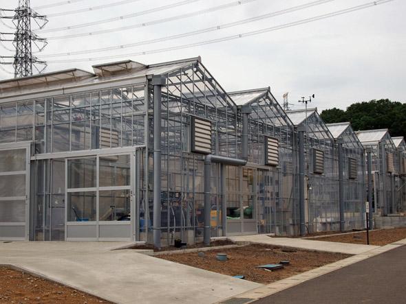 明治大学黒川農場内の温室エリア