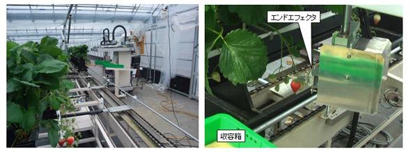 定置型イチゴ収穫ロボットと循環式移動栽培装置の連動と、エンドエフェクタによる採果