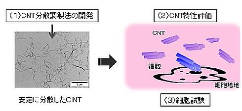 「カーボンナノチューブの安全性試験のための試料調製と計測、および細胞を用いたインビトロ試験の手順」
