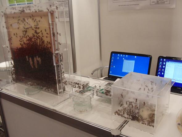 日本大学 生物資源科学部 内ヶ崎研究室