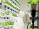 モノづくり最前線レポート:レタスを作る半導体工場!? 植物工場は製造業を救う切り札になるのか