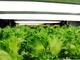 躍進する植物工場、2025年には1500億円市場に——製造業のノウハウ転用に期待