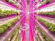 元ソニーの電子デバイス工場が転身!? 1日1万株のレタスを作る人工光植物工場完成