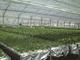 三菱樹脂が中国で植物工場を拡販、2017年までに50カ所