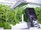 植物工場の生産管理システムを強化——富士通と小林クリエイト